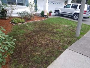 lawn care progress 1