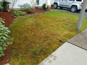 lawn care progress 2