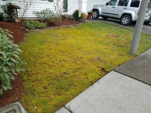 lawn care progress 3