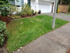 lawn care progress 4