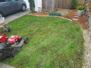 lawn care progress 5
