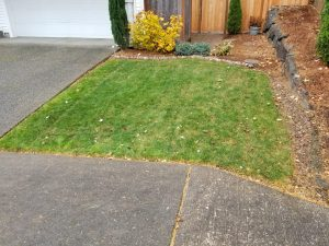 lawn care progress 6