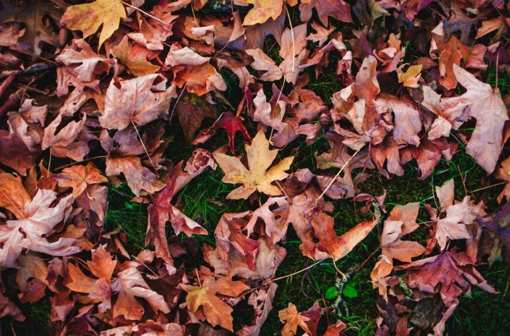 Getting Ready For Fall: 4 Tips For Yard Care & Cleanup