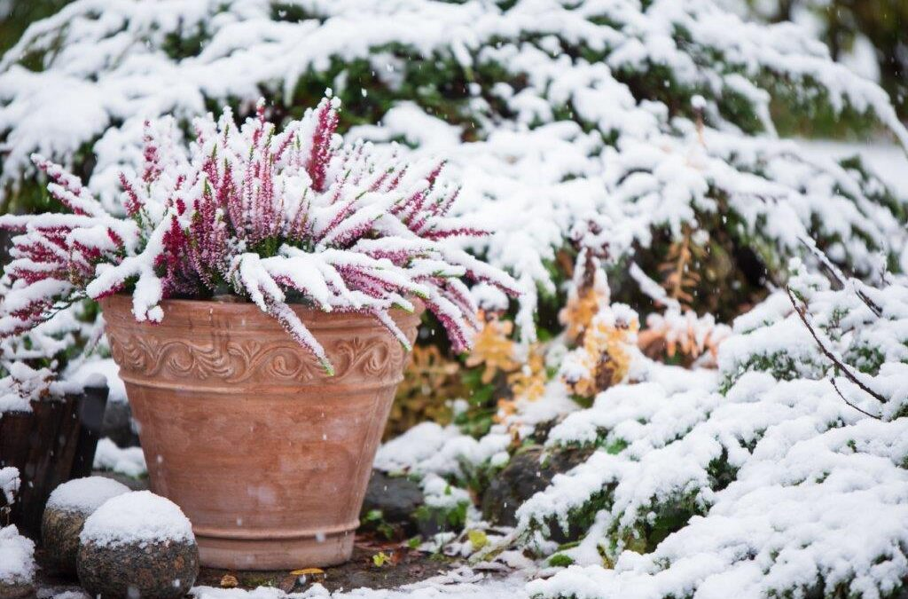 5 Easy Ways to Prepare Your Flower Beds for Winter